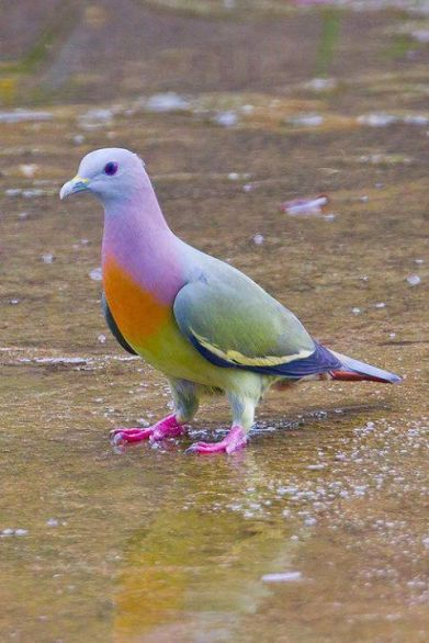 colored birds1
